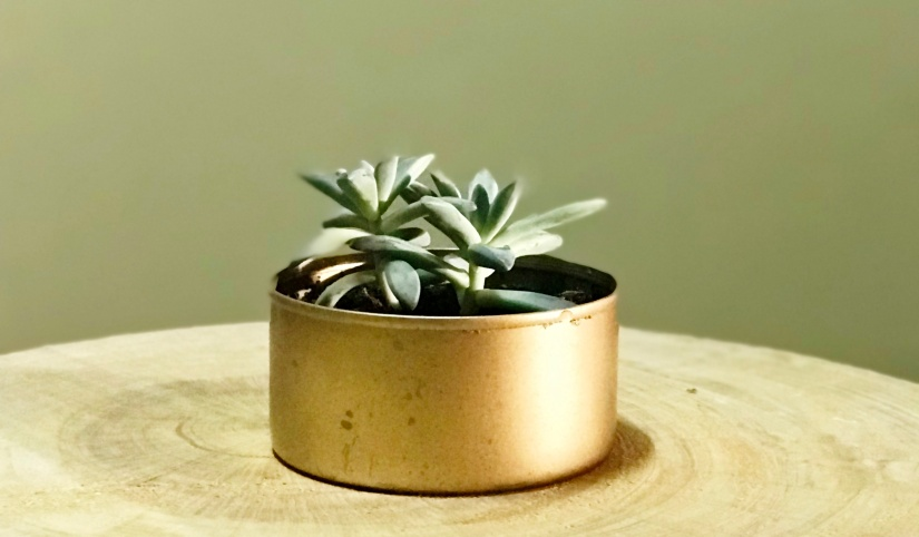 The One About Golden Planters